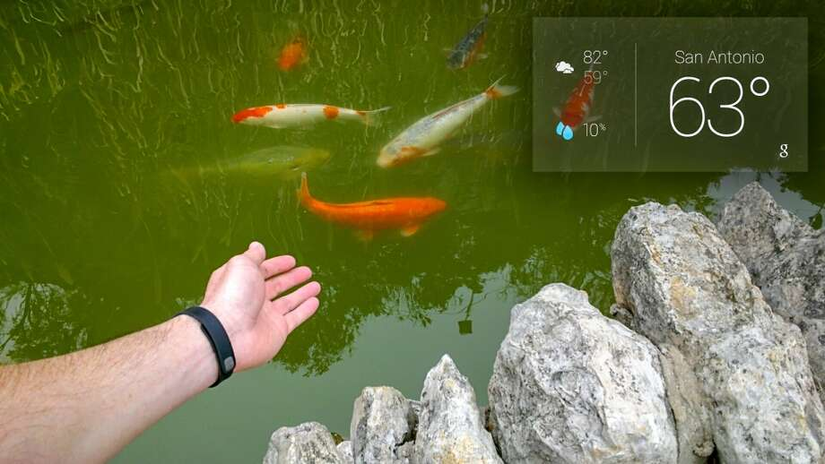 Koi fish in the ponds
