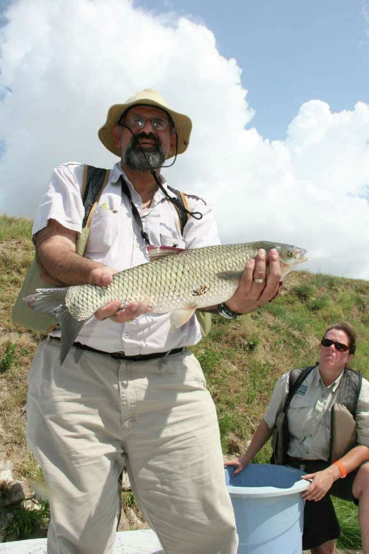 Dr. George Guillen, professor of biology and environmental science at University of Houston-Clear Lake, holds a white amur, or Asian grass carp. Grass carp are native to China but have been introduced throughout the world as a means of weed control.