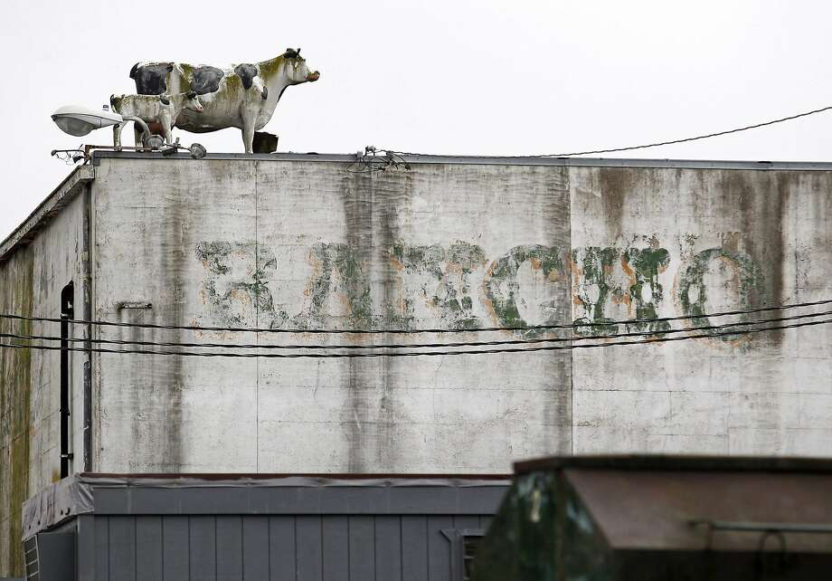 "Statues of cattle sit atop a building at Rancho Feeding Corporation in Petaluma, California, February 10, 2014.  The slaughterhouse is recalling 8.7 million lbs of beef parts because it used ""diseased and unsound animals"" and lacked proper federal inspections, the U.S. Department of Agriculture said.  Photo: Beck Diefenbach, Reuters"