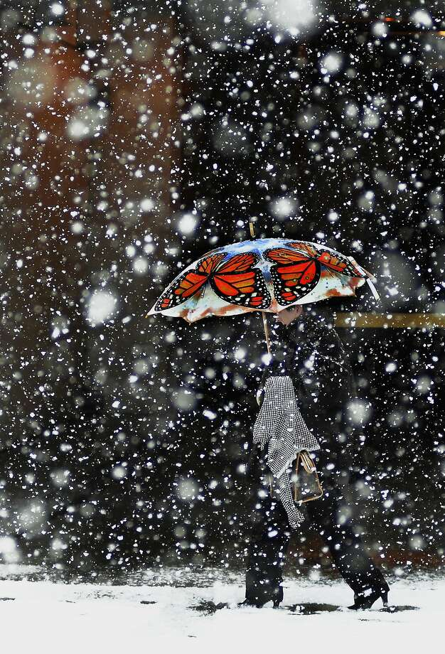 A monarch bumbershoot adds some color to a snowy, monochromatic day in Scranton, 