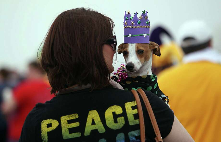 Amanda Gilbert treated Tucker like royalty during the Krewe of Barkus & Meoux Parade along the seawall in Galveston last year. Photo: Mayra Beltran, Staff / © 2013 Houston Chronicle