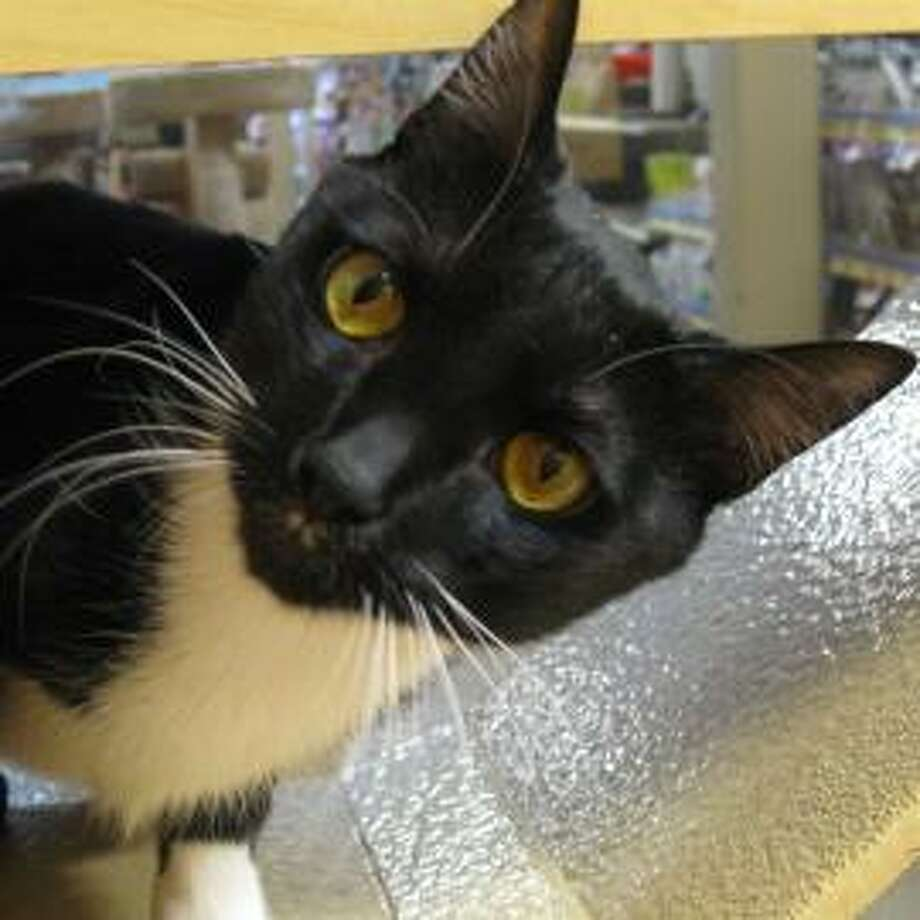 Tish says 'Hey all that's great, but the honor of living with me should be enough to make you want to adopt'