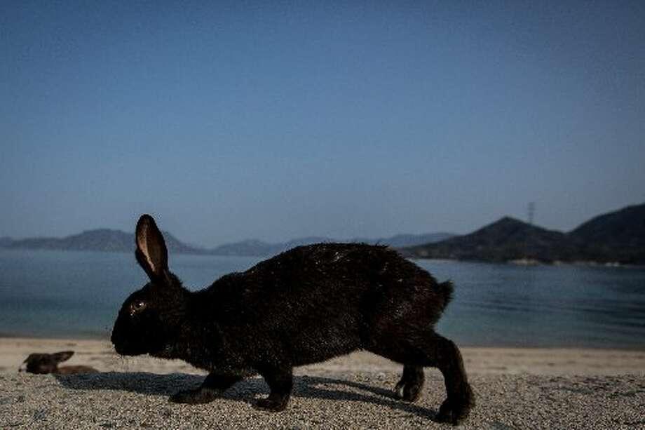 No sir, no mutant rabbits here. Right, li'l buddy?