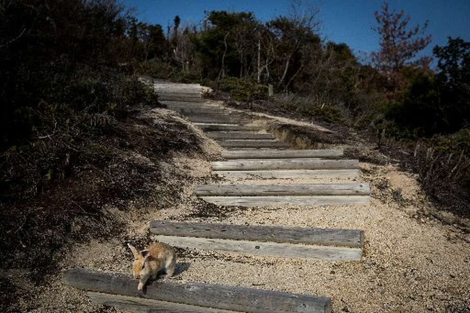 Hopping down the bunny trail, er, bunny stairs.