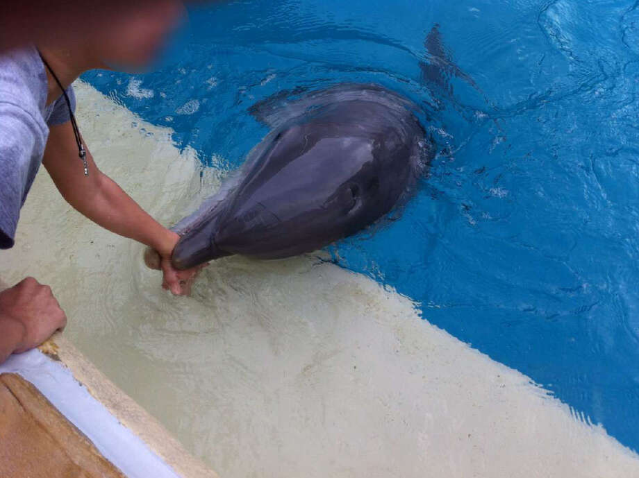 People for the Ethical Treatment of Animals recently filed a federal complaint against SeaWorld after a dolphin reportedly bit a 9-year-old girl visiting its San Antonio park. The child's mother, who sent a photograph of the incident to PETA, could not free her daughter's hand form the dolphin's mouth, and a SeaWorld employee eventually had to shoot the animal with a water gun, according to the USDA complaint. Photo: PETA