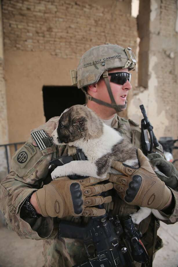 Cruel but not unusual in Afghanistan:At an outpost near Kandahar that was once home to Osama bin Laden, Sgt. Kelly Carmody of the Army's 4th squadron 2d Cavalry Regiment comforts a puppy whose ears were cut off. Afghan canine trainers often remove puppies' ears to prepare the dogs for fighting in the ring. Photo: Scott Olson, Getty Images