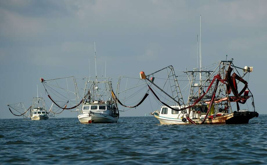 Shrimp boats carry oil-soaked containment booms to be cleaned in Barataria Bay, near Grand Isle, La., in June 2010. The area was affected by the BP Deepwater Horizon oil spill of April 2010. Photo: Saul Loeb, AFP/Getty Images