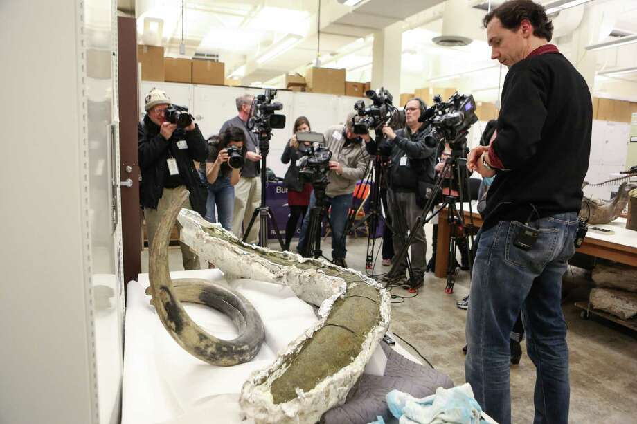 Christian Sidor, curator of vertebrate paleontology, speaks after he uncovered a fossilized mammoth tusk discovered in the South Lake Union neighborhood at the Burke Museum at the University of Washington. The plaster-covered tusk will be on public display during Dino Day on March 8th. The tusk sits next to another mammoth tusk in the museum's collection. Photo: JOSHUA TRUJILLO, SEATTLEPI.COM / SEATTLEPI.COM