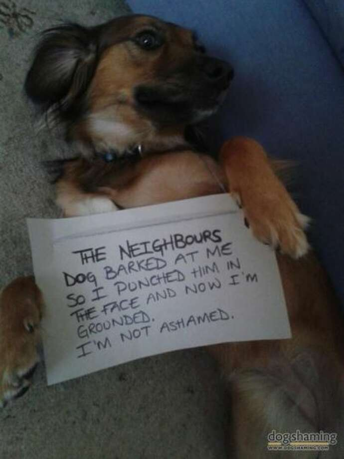 Photo courtesy of DogShaming.com