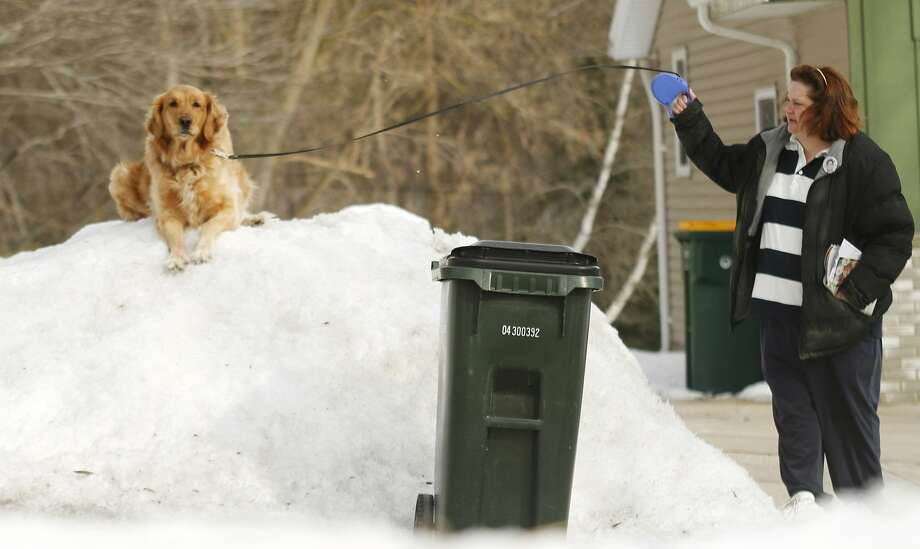Don't bother me, I'm chillin':Dawn Marris gives Penny a yank, but the golden retriever 