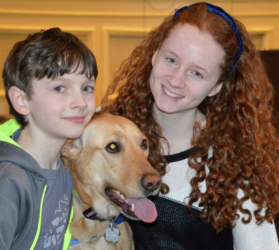 Cali, a rescued yellow lab mix, was named Westport's Top Dog in the annual contest sponsored by Westport Animal Shelter Associates. Here, she savors the acclaim with her owners Brandon Malin, 10, and sister Madison, 14. Photo: Jarret Liotta / Westport News contributed