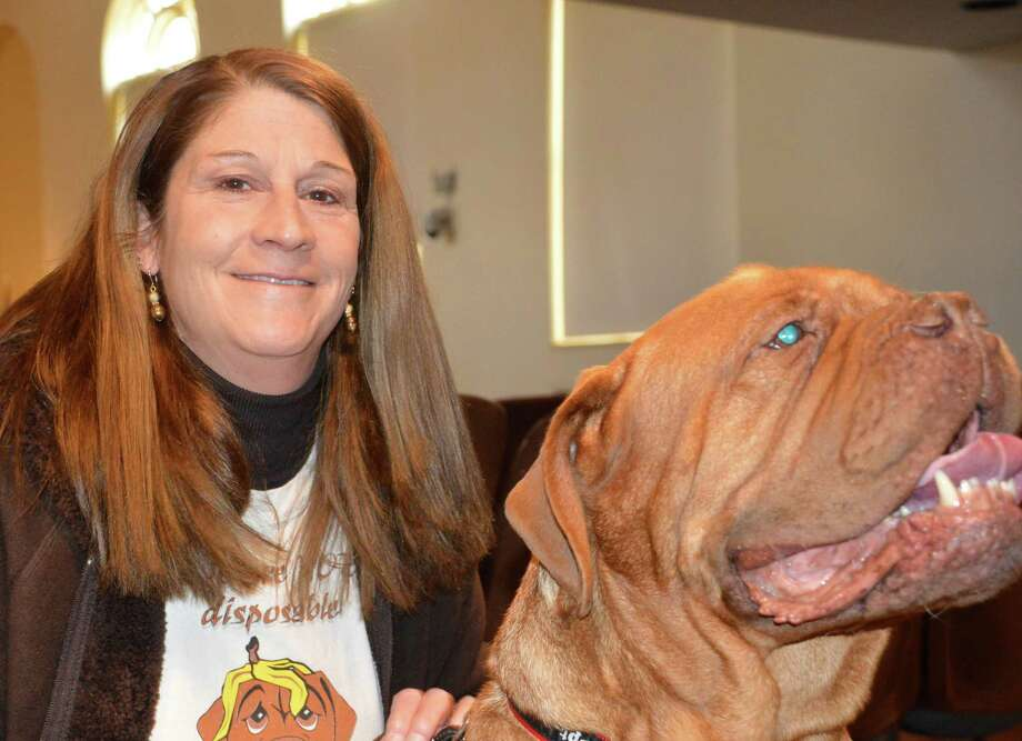 Cynthia Schneider: Cali Has Her Day: Rescued Lab-mix Is Westport's 'Top Dog