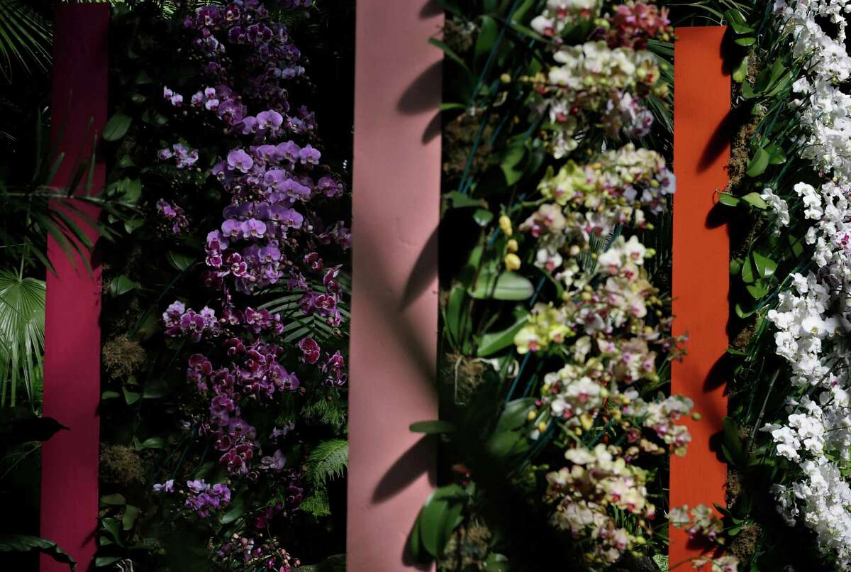 Orchids are displayed at the New York Botanical Garden in New York, Thursday, Feb. 27, 2014. The new exhibit titled