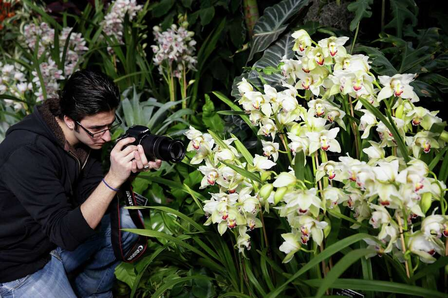 "A man takes video of orchids displayed at the New York Botanical Garden in New York, Thursday, Feb. 27, 2014. The new exhibit titled ""The Orchid Show: Key West Contemporary"" will be open to the public on March 1, 2014. (AP Photo/Seth Wenig) ORG XMIT: NYSW104 Photo: Seth Wenig, AP / AP"