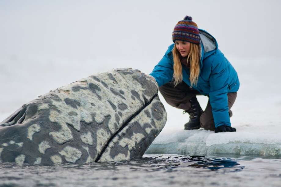 "In this image released by Universal Pictures, Drew Barrymore is shown in a scene from ""Big Miracle,"" a film about the rescue of a family of gray whales trapped by rapidly forming ice in the Arctic Circle. The film, which stars Barrymore and Ted Danson opens Feb. 3. (AP Photo/Universal Pictures, Darren Michaels) Photo: Associated Press"