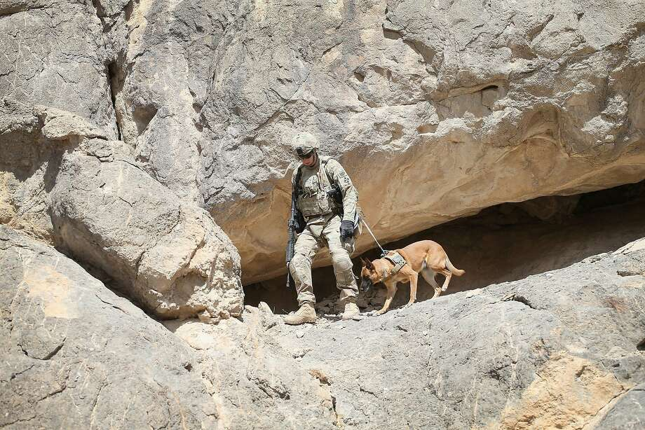 Cavern patrol:Army Spec. Daniel Jackson and his dog, Bailey, search caves for weapons caches near Kandahar. Photo: Scott Olson, Getty Images