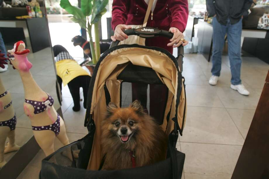 There's the pampered pets, too. Gentrification brings plenty of extra services for furry friends, including pet boutiques. Photo: Eric Luse, The Chronicle