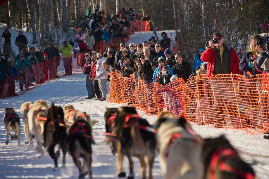 Fans line up along the course for the start of the Iditarod Trail Sled Dog Race on Willow Lake, Sunday, March 2, 2014, in Willow, Alaska. The race will take mushers nearly a thousand miles to the finish line in Nome, on Alaska's western coast. (AP Photo/Anchorage Daily News, Marc Lester) Photo: Marc Lester, Associated Press