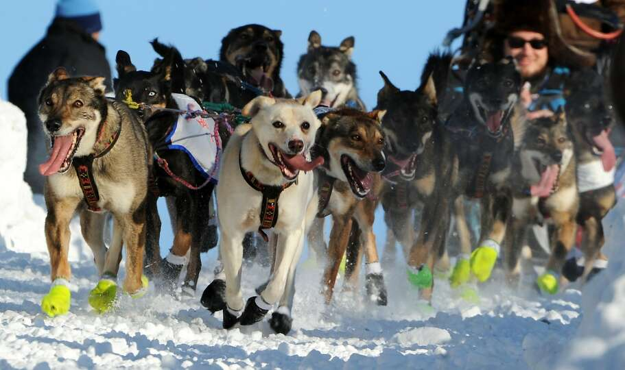 The dog team of Dan Kaduce of Chatanika, Alaska, heads down the Cordova Street hill during the cerem