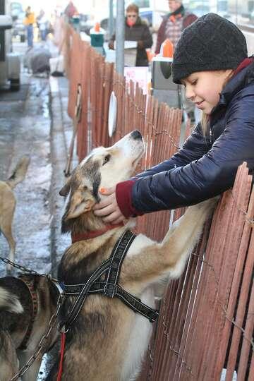 Iditarod spectator Yasmin Rodriguez, 11, of Anchorage, Alaska, pets Caesar, a dog belonging to mushe