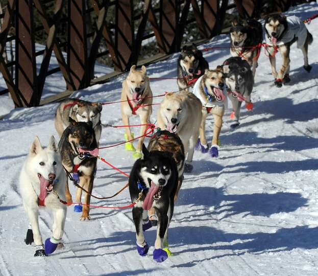 The dogs of Marcelle Fressineau of Whitehorse, Yukon Territory, Canada, trot down the Chester Creek