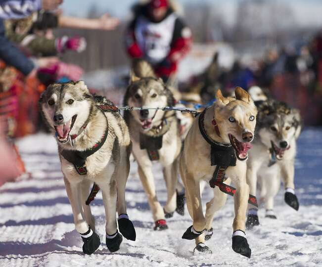 Aliy Zirkle's team runs across Willow Lake during the Iditarod Trail Sled Dog Race in Willow Lake, A