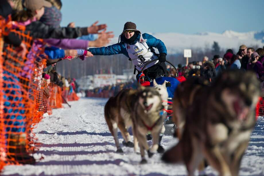 Musher Yvonne Dabakk greets fans of the Iditarod Trail Sled Dog Race in Willow Lake, Alaska, on Sunday, March 2, 2014. (Marc Lester/Anchorage Daily News/MCT) Photo: Marc Lester, McClatchy-Tribune News Service