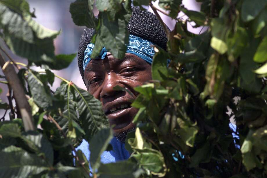 "BUSHMAN 3-C-12JUL99-MN-MAC   = David ""Bushman"" Johnson has been scaring tourists along Fisherman's Wharf for the past 20 years. Hiding behind tree branches and jumping out at the last moment. DAVID Johnson watches for his next victim. STREET ARTISTS UNIQUE APPROACH.  PHOTO  by Michael Macor/The Chronicle Photo: Michael Macor"