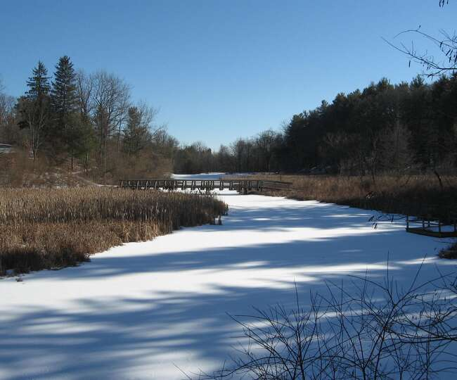 A frozen pond at Fiver Rivers Environmental Center is another example of winter?s splendor in this p