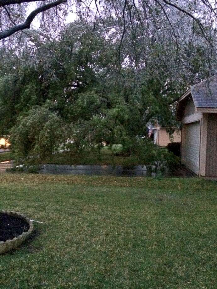 Ice weighs down a tree in a Houston yard Tuesday morning, March 4, 2014. (Submitted by Daniel Scholl)