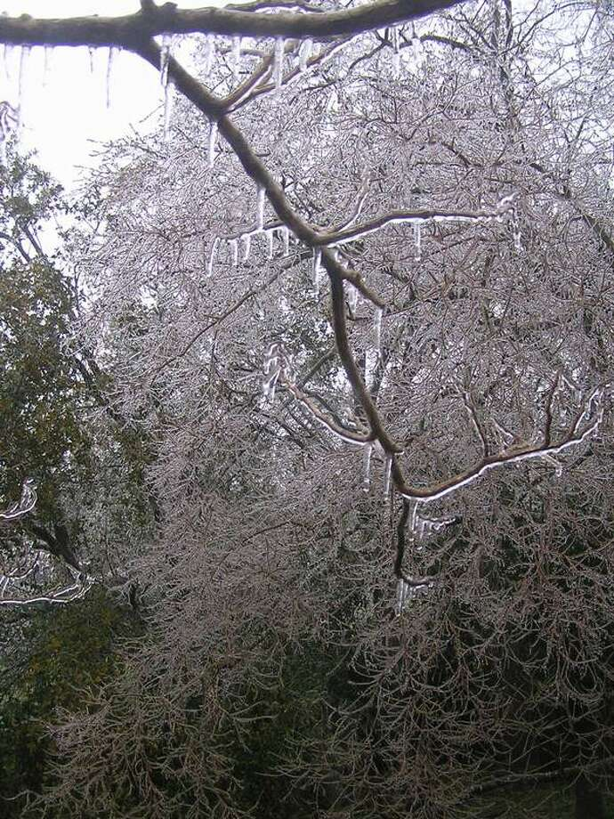 Ice covers tree limbs in Houston Tuesday morning, March 4, 2014. (Submitted by Kathryn Hatfield)