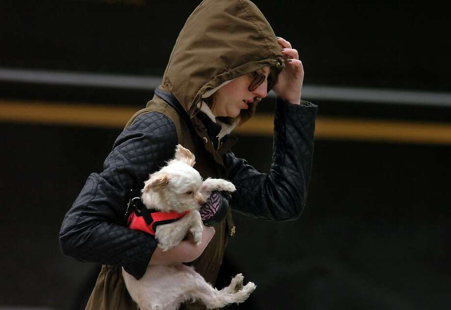 Unfit for woman or beast: A pedestrian and her best friend hurry down the street in 