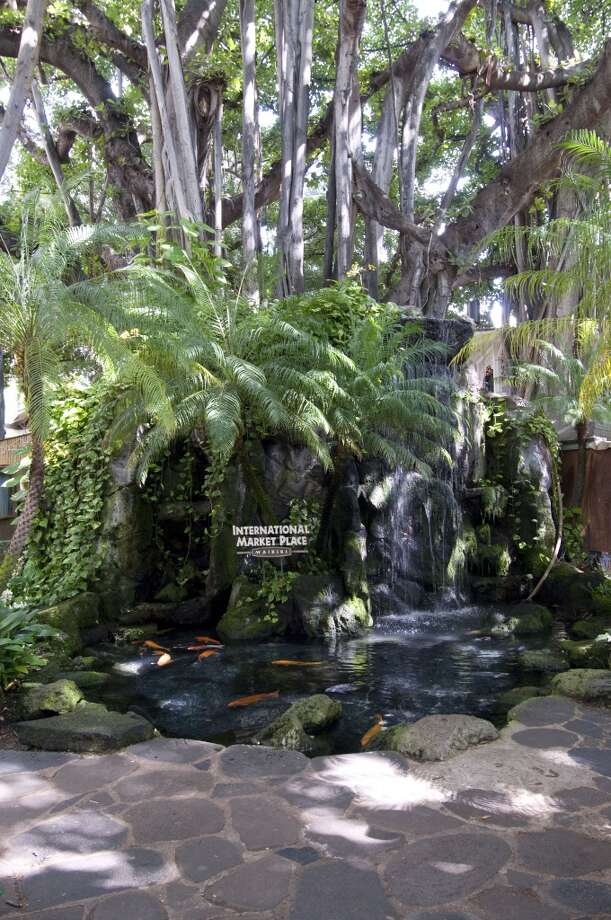 The fishpond under the shade of a banyan tree gave the International Market Place the feel of an oasis (albeit a commercial one) in the heart of Waikiki. Photo: Linda Ching, Getty Images/Lonely Planet Images