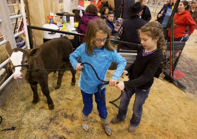 Charlie Bell, 6, left, and Ella Rentrop, 7, help walk, Moonshine, a two week old calf during the liv