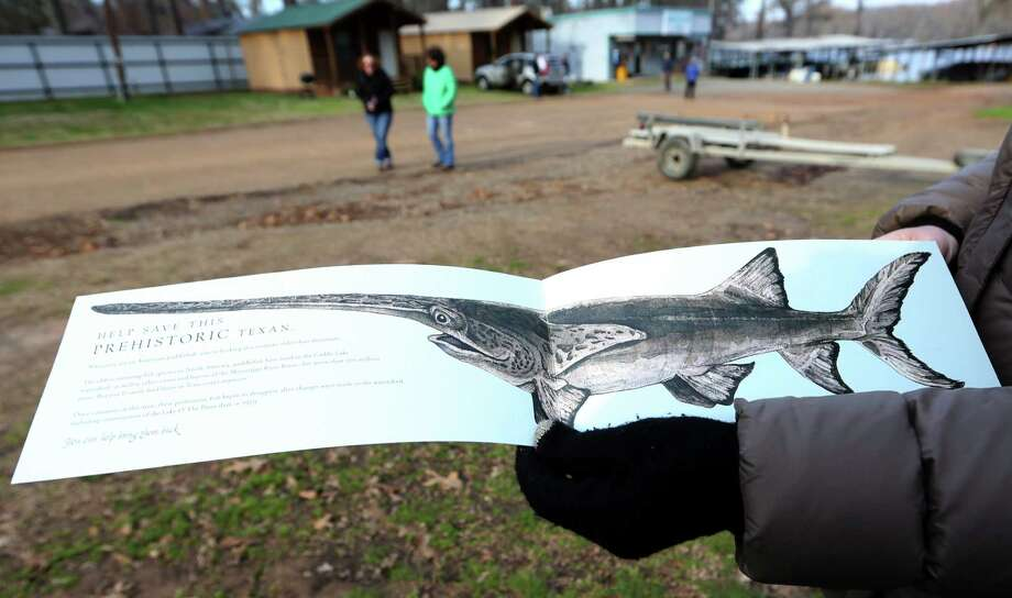 In this photo made Wednesday, Feb. 26, 2014, a drawing of a paddle fish is displayed after a tour of Caddo Lake in Uncertain, Texas. Scientists and researchers from a half-dozen state, federal and private agencies are planning to release up to 50 paddlefish into this Texas lake they once called home. Photo: LM Otero, AP / AP
