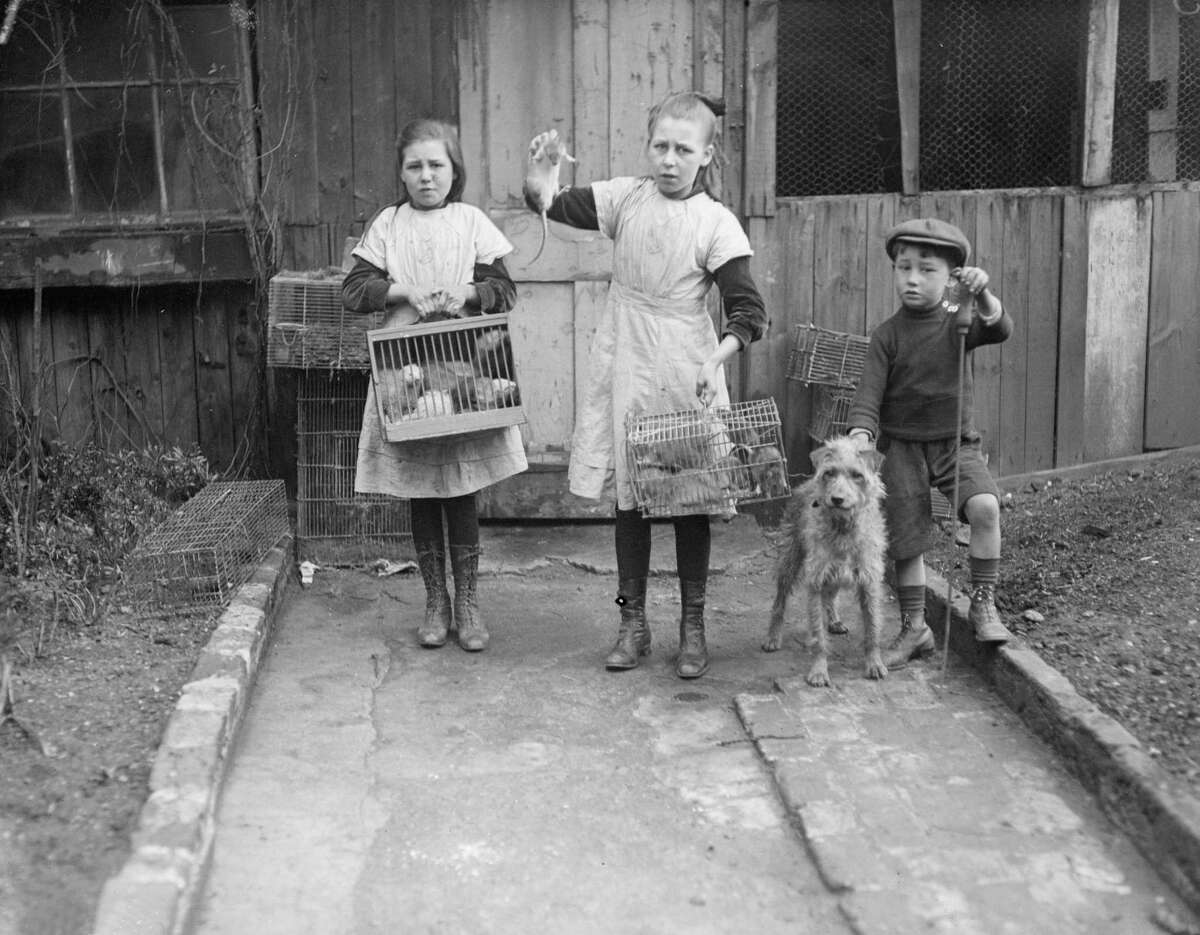 Here's a job we're thankful doesn't exist anymore: rat catching. These poor little ones are arriving home after a night spent catching rats on the streets in May 1916.