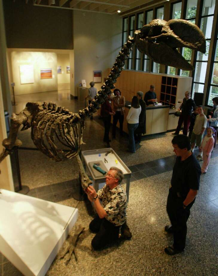 Go: Burke MuseumIt's affordable and there are dinosaurs. RAWR. Photo: KAREN DUCEY, Seattlepi.com File Photo