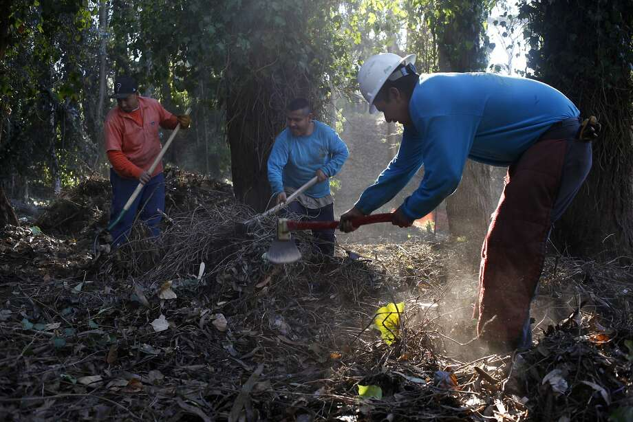 Jesus Perez (left), Juan Sandoval and Luis Camarillo clear brush and remove vegetation that's not native to the area as part of the Presidio Trust's restoration at Mountain Lake on the edge of the Inner Richmond. Photo: Lacy Atkins, The Chronicle