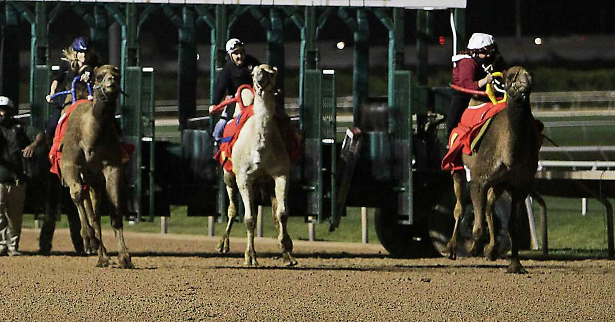 Channel 11 weatherwoman Chita Johnson, left, and KKHH's Sarah Pepper saddled up during the camel and ostrich races at Sam Houston Race Park last year.