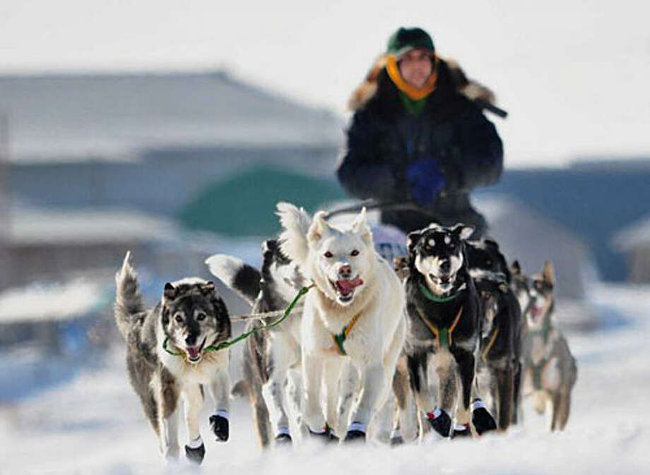 The annual Iditarod takes mushers and their 16 dogs 1,112 miles in 8-10 days in freezing temperatures and harsh conditions. Photo: Glenn Cantor/Flickr Vision