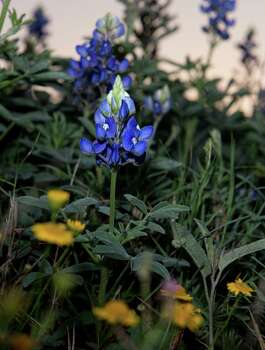 Photo by Eddie Seal for the San Antonio Express News