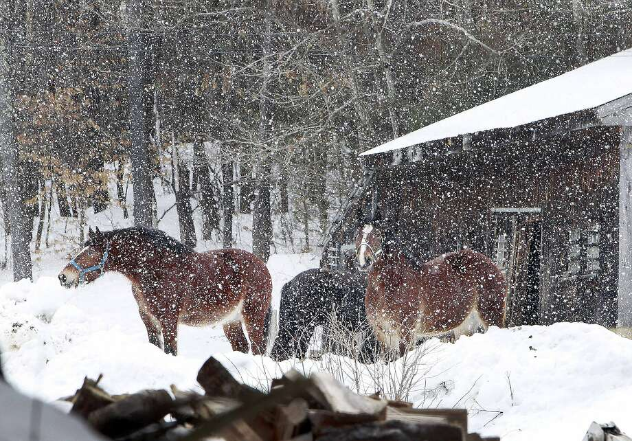 Wilbrrrrr:A snow squall dumps flakes on a pair of work horses in Canterbury, N.H., which was bracing for another night of below-zero temperatures. Photo: Jim Cole, Associated Press