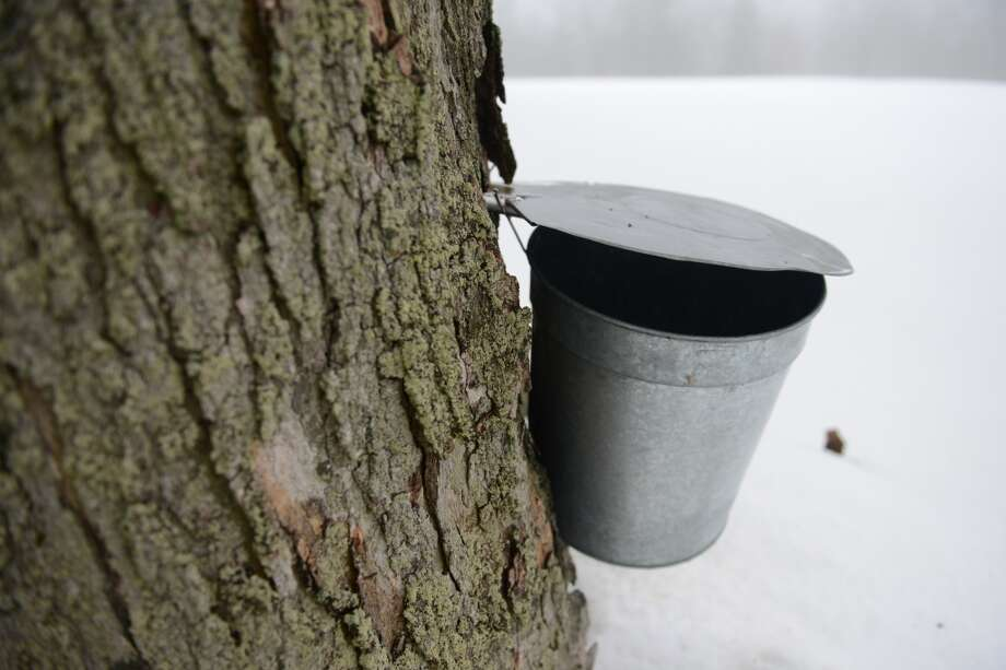 Plan a trip to New Pond Farm at 101 Marchant Road, West Redding, where a couple of programs are planned for Saturday, March 8, including a backyard maple syrup event and winter astronomy night. Both programs require registration and come with a fee. For more information, call 203-938-2117, visit www.newpondfarm.org. Photo: Tyler Sizemore