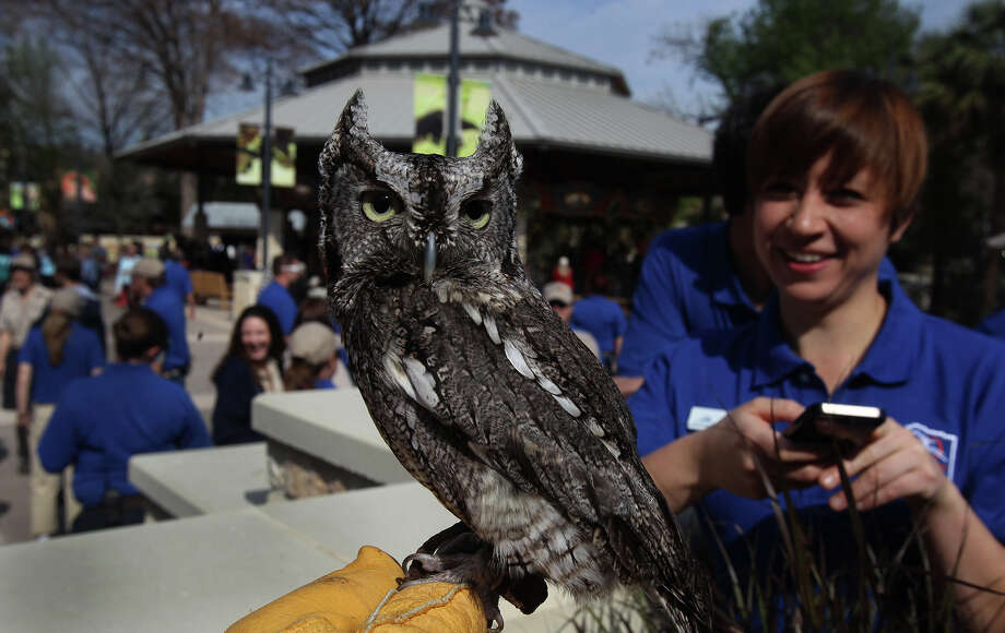 """Twig"" the screech owl sits on the hand of zoo employee Laura Personius as Samantha Litchke (right) watches Friday March 7, 2014 during the opening of Zootennial Plaza at the San Antonio Zoo. The opening of the new area at the zoo marks the San Antonio Zoo's 100th anniversary and features a restaurant, a carousel ride (behind owl), and a centralized family gathering area. Photo: JOHN DAVENPORT, SAN ANTONIO EXPRESS-NEWS / ©San Antonio Express-News/Photo may be sold to the public"