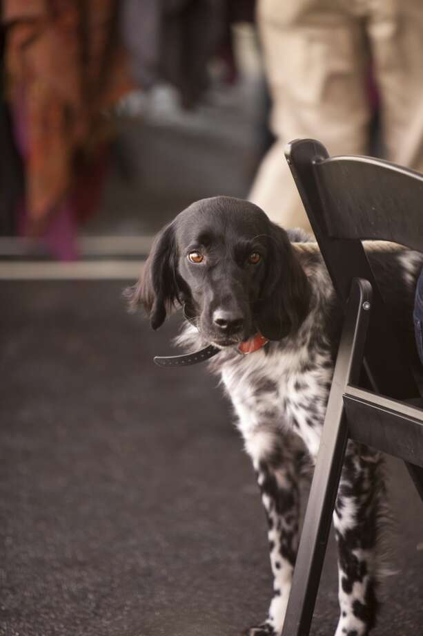 Even canines were in attendance at the Fine Art of Shooting, March 1 2014, Photo: Jenny Antil