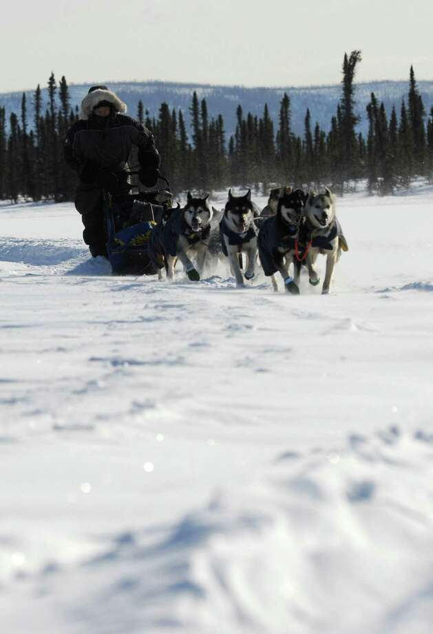 Mike Williams Jr. of Akiak, Ak., arrives at the Cripple checkpoint during the 2014 Iditarod Trail Sled Dog Race on Thursday, March 6, 2014. (Bob Hallinen/Anchorage Daily News/MCT) Photo: Bob Hallinen, McClatchy-Tribune News Service / Anchorage Daily News