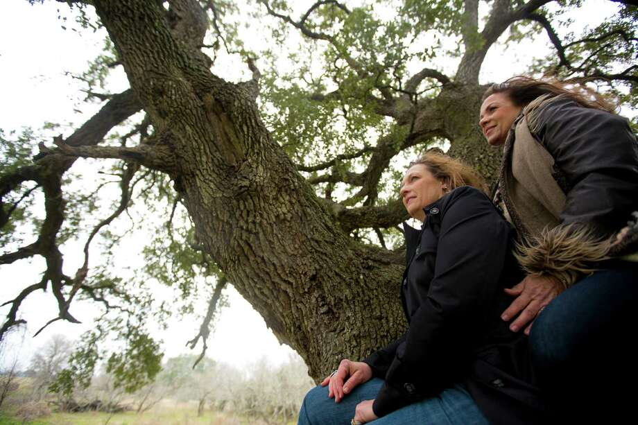 Regina McCurdy and her sister Phyllis Giesenschlag-Tietjen share many family memories together enjoying the shade and the strength of a 500 years old oak tree. Now they are contesting with TxDOT over a planned highway, which will pass over their land. The issue isn't the land, but the stand of centuries-old oak trees on the property. The family just want the trees protected. Wednesday, Feb. 26, 2014, in Snook. ( Marie D. De Jeséºs / Houston Chronicle ) Photo: Marie D. De Jeséºs, Staff / © 2014 Houston Chronicle