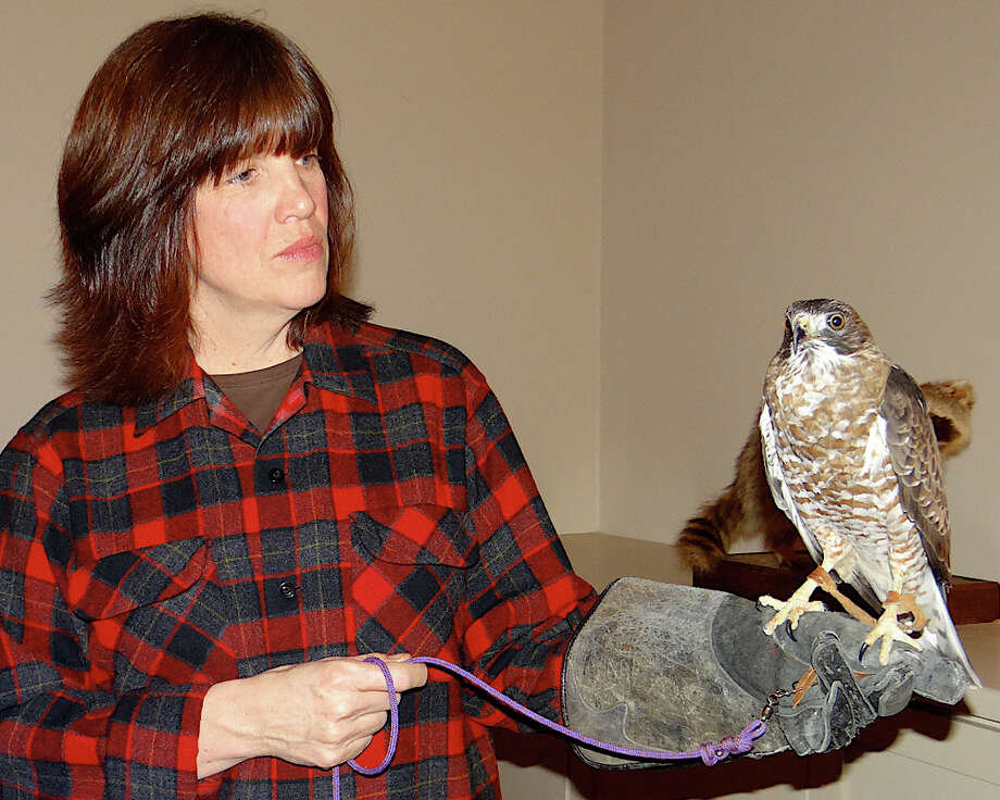 Connecticut Audubon educator Colleen Noyes with Bella, a broad winged hawk, at Connecticut Audubon's Adirondack Night fundraiser. Photo: Mike Lauterborn / Fairfield Citizen