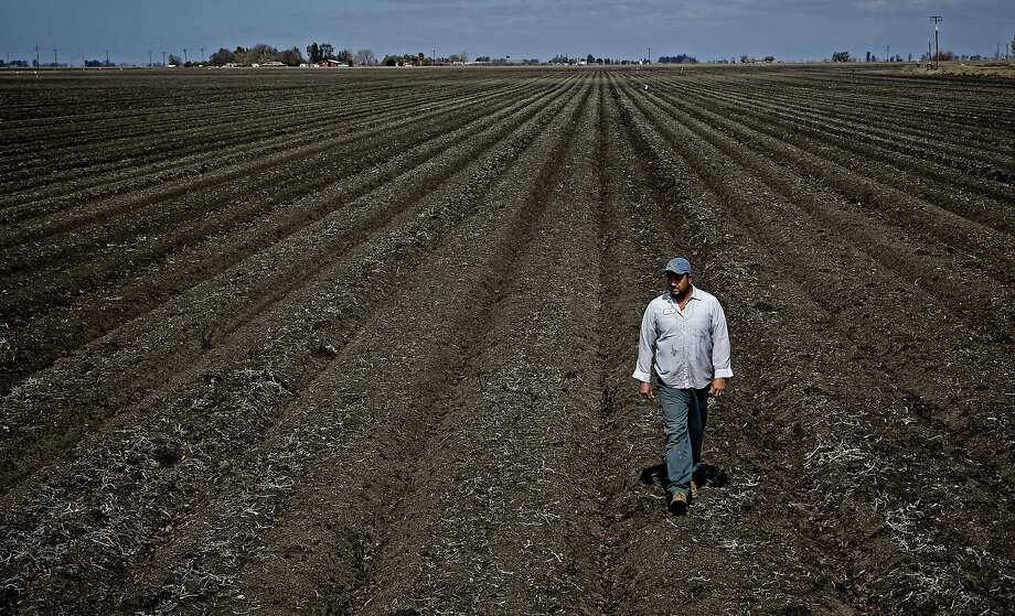 Coburn Farms foreman Jose Gonzales walks along an empty field near Firebaugh (Fresno County), among many left unplanted. Photo: Michael Macor, The Chronicle