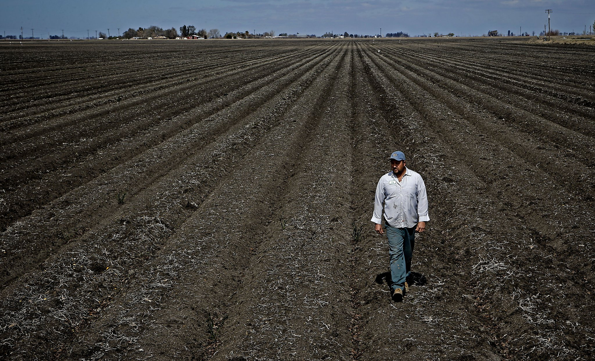 California S Drought Prone Pattern Forcing Farmers To Adapt Sfgate